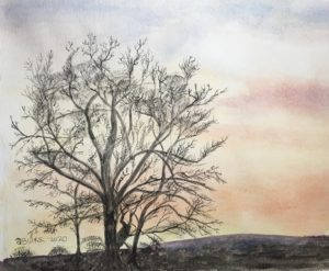 Gregg's Tree, Judy's Sunset